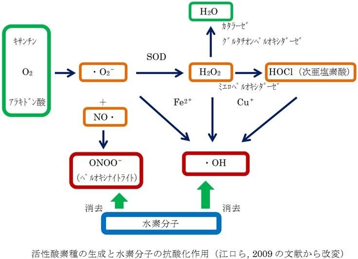 水素分子の活性酸素除去作用