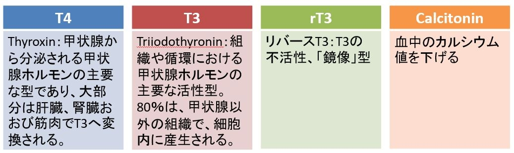 甲状腺ホルモンの種類